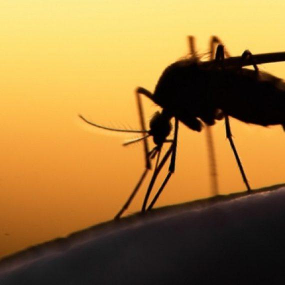 La maternité de substitution et le virus Zika